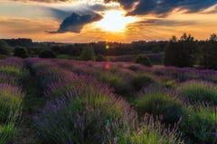 在日落的淡紫色 库存照片