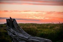 在日落的漂流木头太平洋 库存照片