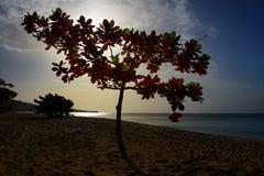 在日落的热带海滩树 免版税库存照片