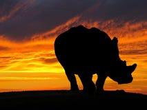 在日落的犀牛在非洲 库存图片