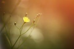 在日落的狂放的草甸花 免版税图库摄影