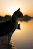 在日落的猫在湖附近 免版税库存图片