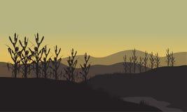 在日落的玉米剪影 库存照片