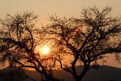 在日落的现出轮廓的结构树 库存图片