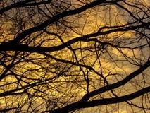 在日落的现出轮廓的树枝 免版税库存照片