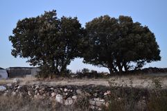 在日落的珍贵的双圣栎在Becerril 风景假日旅行 免版税图库摄影
