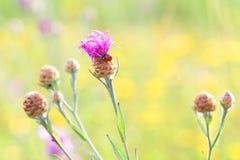 在日落的瓢虫在准备的花下睡觉 库存图片