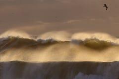 在日落的由后面照的风雨如磐的波浪浪花 免版税库存图片