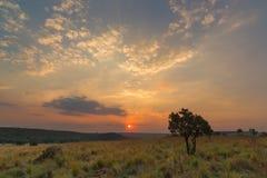 在日落的疏散云彩 免版税库存照片
