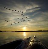 在日落的皮船与鹅登陆 免版税库存图片