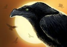 在日落的盘旋的乌鸦 库存图片