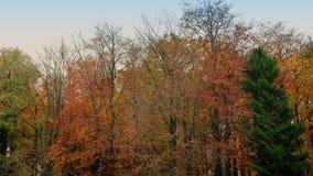 在日落的秋天结构树 股票录像