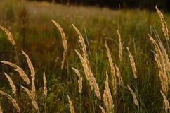 在日落的秋天领域 图库摄影