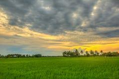 在日落的米领域 免版税库存照片