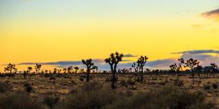 在日落的约书亚树 免版税库存照片