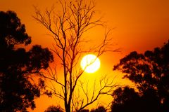 在日落的结构树剪影 免版税图库摄影