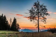 在日落的结构树剪影 库存图片