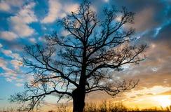 在日落的结构树剪影 免版税库存图片