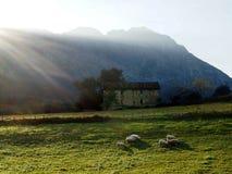 在日落的绵羊 免版税库存照片