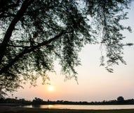 在日落的罗望子树剪影 免版税图库摄影
