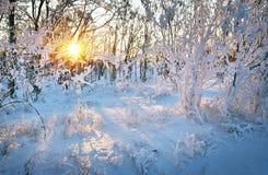 在日落的美好的冬天风景与在雪和太阳的树 图库摄影