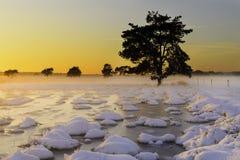 在日落的美好的冬天风景与雪和雾 免版税库存照片