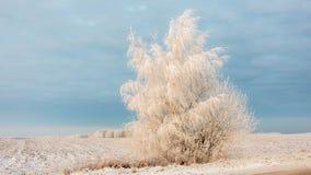 在日落的美好的冬天风景与雾和雪 库存照片