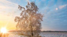 在日落的美好的冬天风景与雾和雪 免版税图库摄影