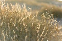 在日落的美好的抽象背景草纹理 免版税库存照片