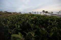 在日落的美好的风景沿海太平洋风景 库存图片