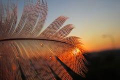 在日落的羽毛 免版税库存图片