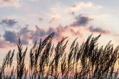 在日落的耳朵与云彩 库存图片
