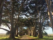 在日落的自然木隧道在点reyas 2的加利福尼亚美国 22 16 免版税库存照片