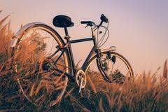 在日落的自行车在公园 免版税库存图片