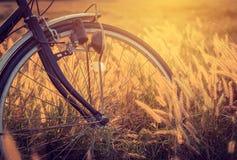 在日落的自行车在公园 免版税图库摄影