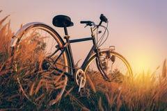 在日落的自行车在公园 库存图片
