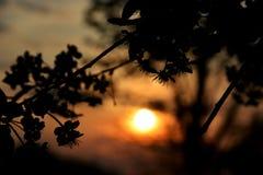 在日落的花 免版税库存图片