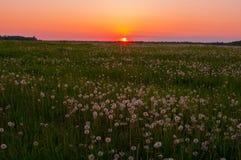 在日落的草甸 库存照片