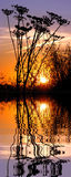 在日落的草水面上与反射 免版税库存照片