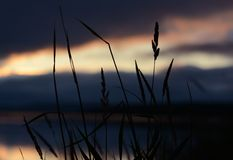 在日落的草 免版税图库摄影