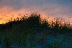 在日落的落寞海滩草 免版税库存图片