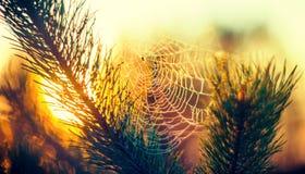 在日落的蜘蛛网 免版税图库摄影