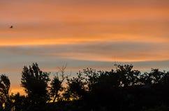 在日落的被遮蔽的树,橙色天空,关闭,风景 免版税库存照片