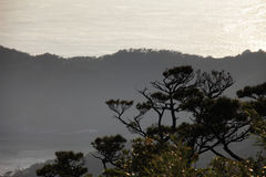 在日落的针叶树 免版税库存照片