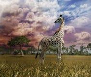 在日落的长颈鹿 库存图片