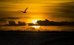 在日落的飞行 免版税库存图片
