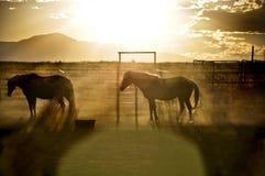 在日落的马 免版税库存照片