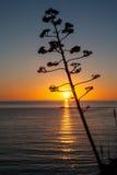 在日落的高大的树木在画象 免版税图库摄影