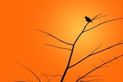 在日落的鸟剪影 免版税库存照片
