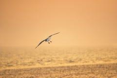 在日落的鸟飞行在低潮期间 免版税库存图片